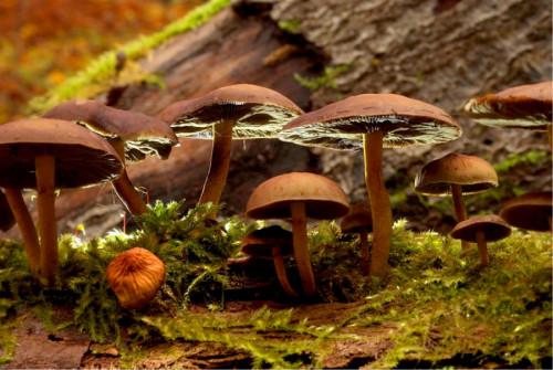 Conferenza serale sui funghi
