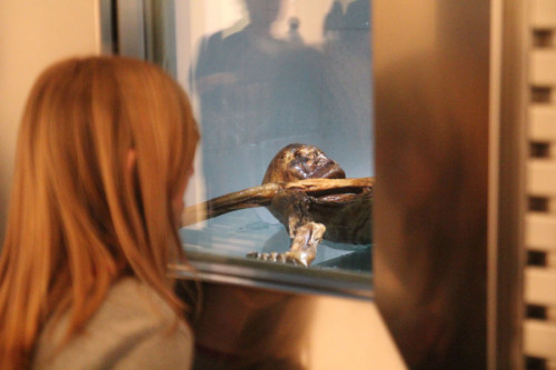 (c) Südtiroler Archäologiemuseum / O. Verant: Blick in die Kühlzelle des Mannes aus dem Eis